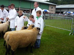 cae main royal welsh