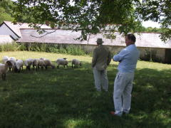 st fagans flock inspection